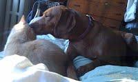 photo of Chloe (dog) & Jeffrey (cat)